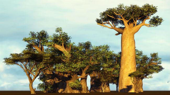 baobab-650x3652