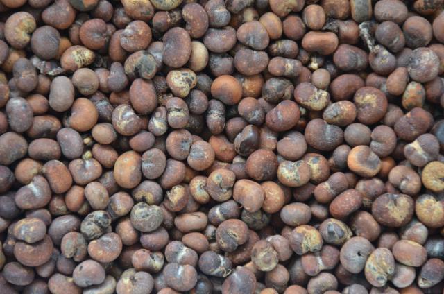 baobab_seeds_senegal